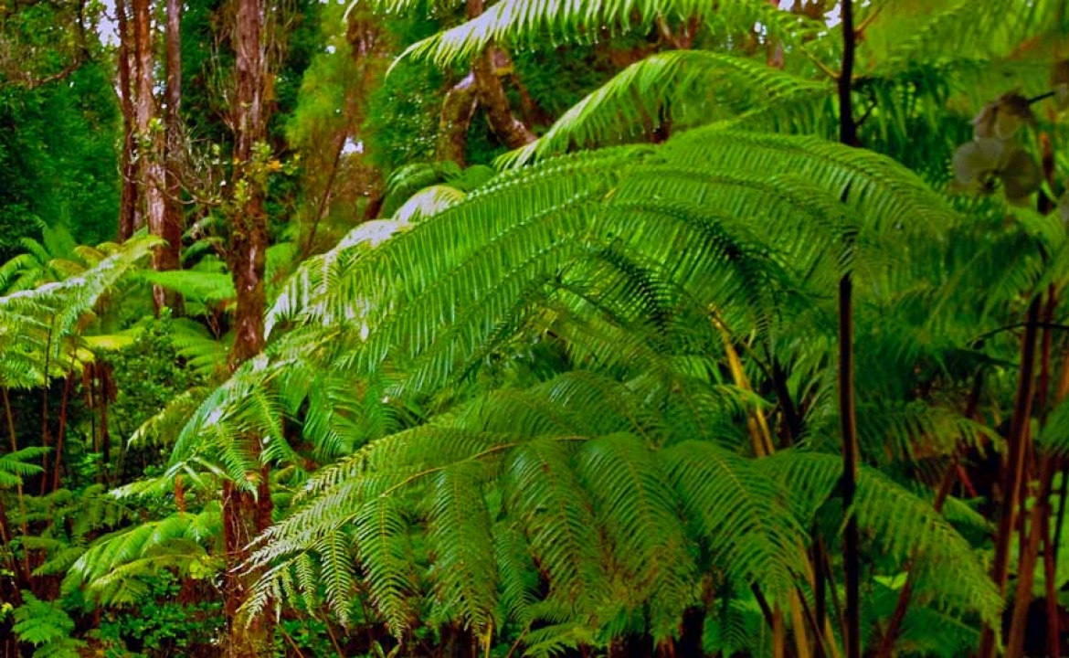 How to Grow Tree Ferns